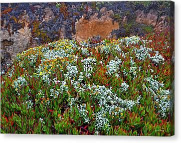 California Coast Wildflowers Canvas Print by George Bostian