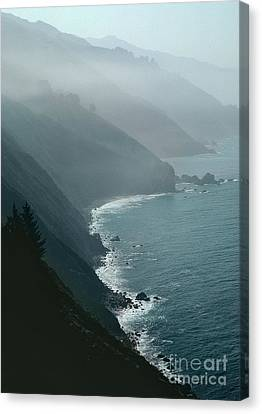 Sea Birds Canvas Print - California Coastline by Unknown