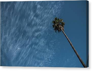 California Dreamin' Canvas Print by Richard White