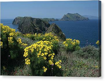 California Island Sunshine Canvas Print