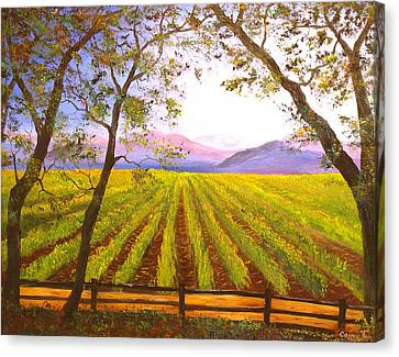 California Napa Valley Vineyard Canvas Print by Connie Tom