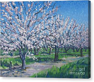 California Orchard Canvas Print by Vanessa Hadady BFA MA