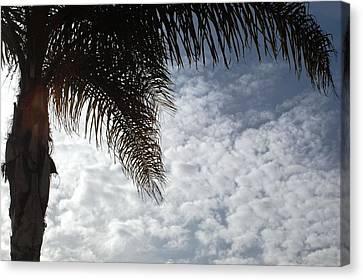 California Palm Tree Half View Canvas Print