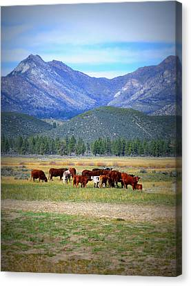 Canvas Print featuring the photograph California Pastures by Glenn McCarthy Art and Photography