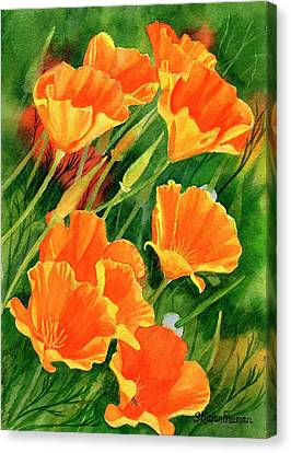 California Poppies Faces Up Canvas Print by Sharon Freeman