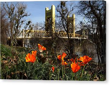 Old Sacramento Canvas Print - California Poppies With The Slightly Photographically Blurred Sacramento Tower Bridge In The Back by Wingsdomain Art and Photography