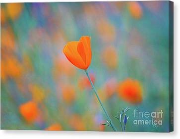 Spring Poppy Canvas Print by Anthony Bonafede