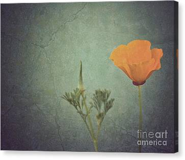 California Poppy Canvas Print by Cindy Garber Iverson