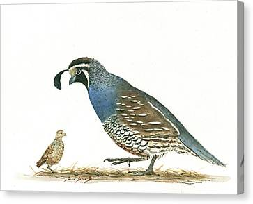 Quail Canvas Print - California Quail by Juan Bosco