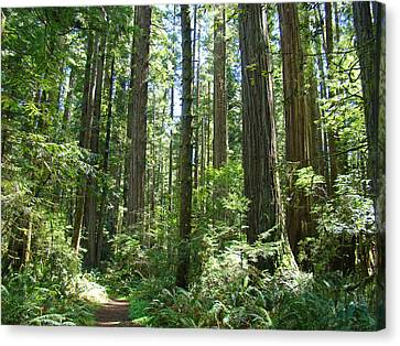 California Redwood Trees Forest Art Prints Canvas Print by Baslee Troutman