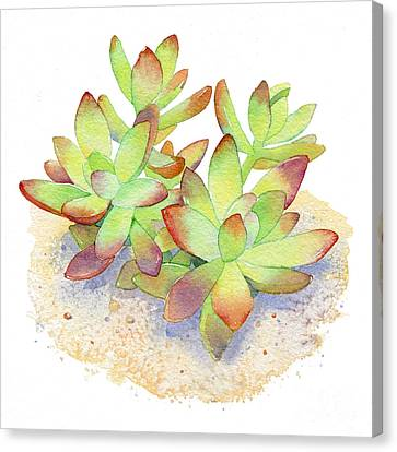 Cactus Watercolor Canvas Print - California Sunset Succulent by Laura Nikiel