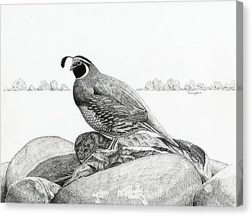 California Valley Quail Canvas Print