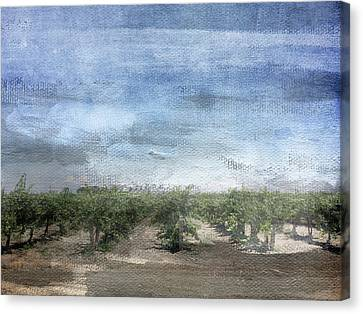 Grape Vines Canvas Print - California Vineyard- Art By Linda Woods by Linda Woods