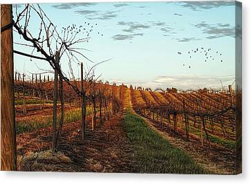 California Vineyard In Winter Canvas Print by Glenn McCarthy Art and Photography