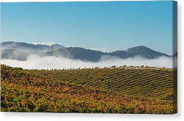 California Vineyard Canvas Print by Joseph Smith