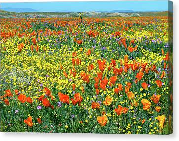Canvas Print featuring the photograph California Wildflower Super Bloom by Ram Vasudev