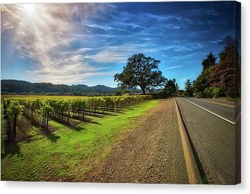 California Wine County Road- Sonoma Vineyard And Lone Oak Tree Canvas Print by Jennifer Rondinelli Reilly - Fine Art Photography