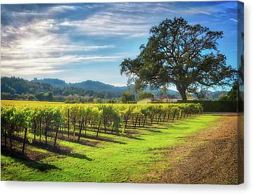 Vineyard In Napa Canvas Print - California Wine County - Sonoma Vineyard And Lone Oak Tree by Jennifer Rondinelli Reilly - Fine Art Photography