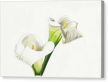 Calla Lilies No 1 Canvas Print