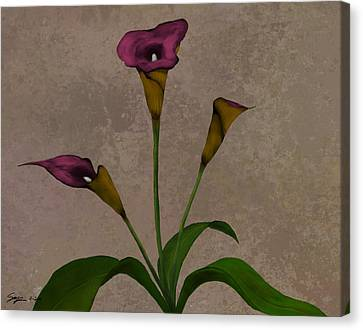 Calla Lilies Canvas Print by Steven Powers SMP