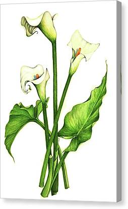Canvas Print featuring the painting Calla Lilly by Heidi Kriel