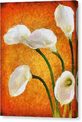 Calla Lily II Canvas Print by Jai Johnson