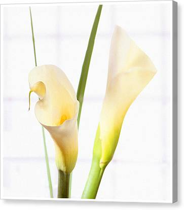 Calla Lily Canvas Print by Mike McGlothlen