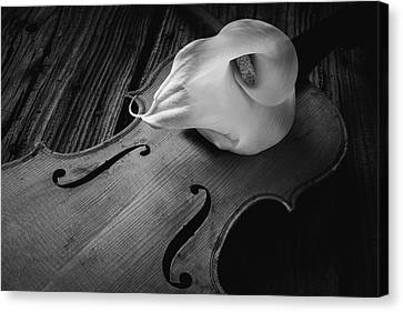Calla Lily On Violin Black And White Canvas Print by Garry Gay