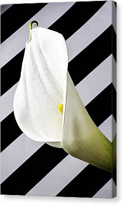 Calla Lily With Strips Canvas Print by Garry Gay