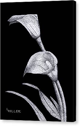 Stippling Canvas Print - Calla by Linda Hiller
