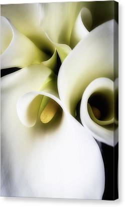 Calla Mystery  Canvas Print by Garry Gay