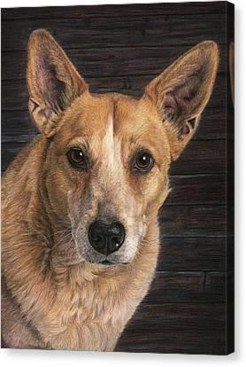 Callie, The Red Heeler Canvas Print by Karen Broemmelsick
