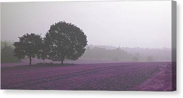 Calm Autumn Mist Canvas Print
