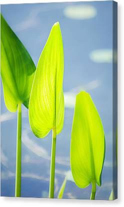 Calm Greens Canvas Print