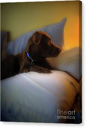Calm Puppy Canvas Print