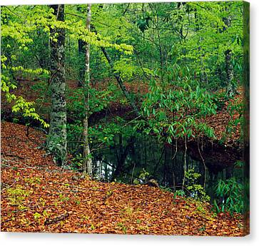Calm Stream Through Beech And Magnolia Canvas Print by Panoramic Images