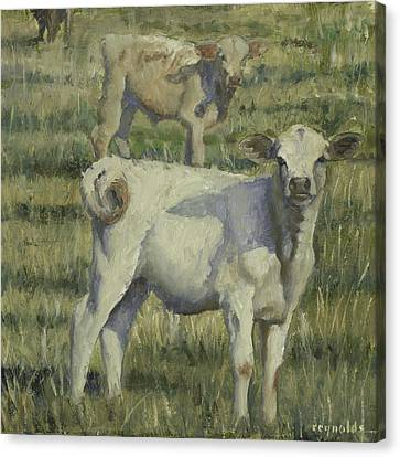 Calves In The Pasture Canvas Print by John Reynolds
