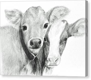 Canvas Print featuring the drawing Calves by Meagan  Visser