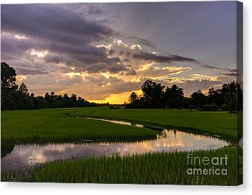 Cambodia Rice Fields Sunset Canvas Print by Mike Reid