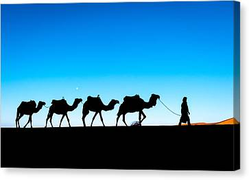 Camel Caravan On The Sahara Desert Canvas Print