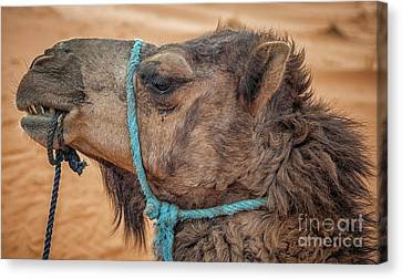 Canvas Print - Camel Head by Patricia Hofmeester