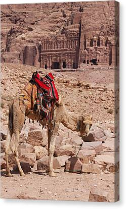 Camel In Front Of The Royal Tombs In Petra Canvas Print by Martin Child