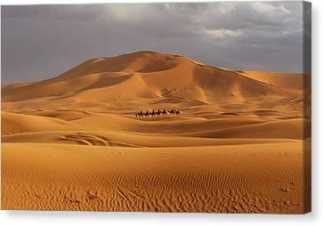 Canvas Print featuring the photograph Camel Trek by Ramona Johnston
