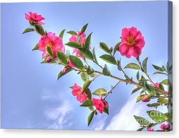 Camellia Canvas Print by Elaine Teague
