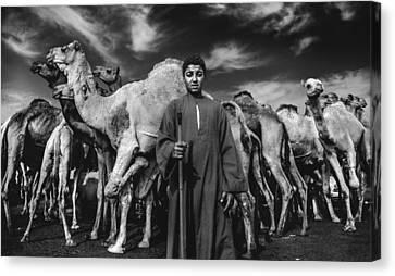 Camels Gaurdian Canvas Print