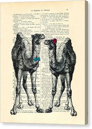 Camels Married Couple Canvas Print