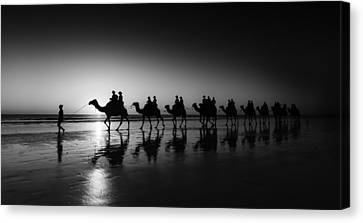 Camels On The Beach Canvas Print