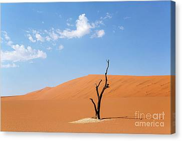 Canvas Print - Camelthorn Tree In Sossusvlei, Namibia by Julia Hiebaum