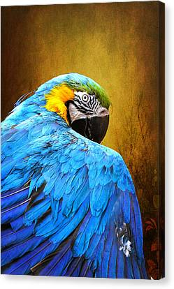 Canvas Print featuring the photograph Camera Shy by John Rivera