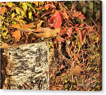 Canvas Print featuring the photograph Camo Bird by Debbie Stahre
